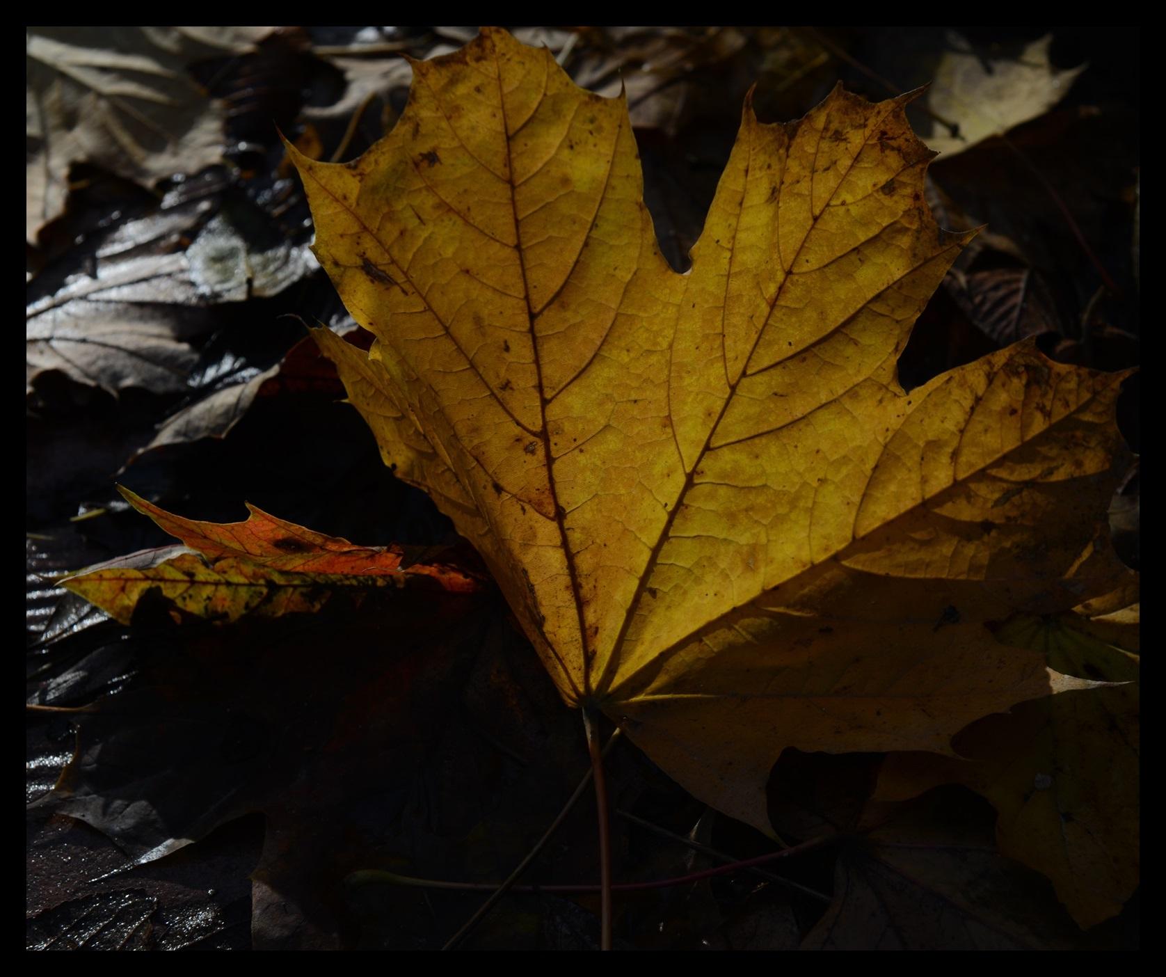 Sonbahar Yağmurları tablosunda kompozisyon